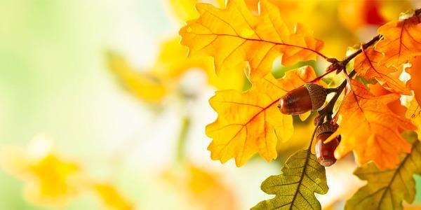 Astenia Otoñal y como afecta a tu salud